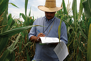 evaluation ref cimmyt